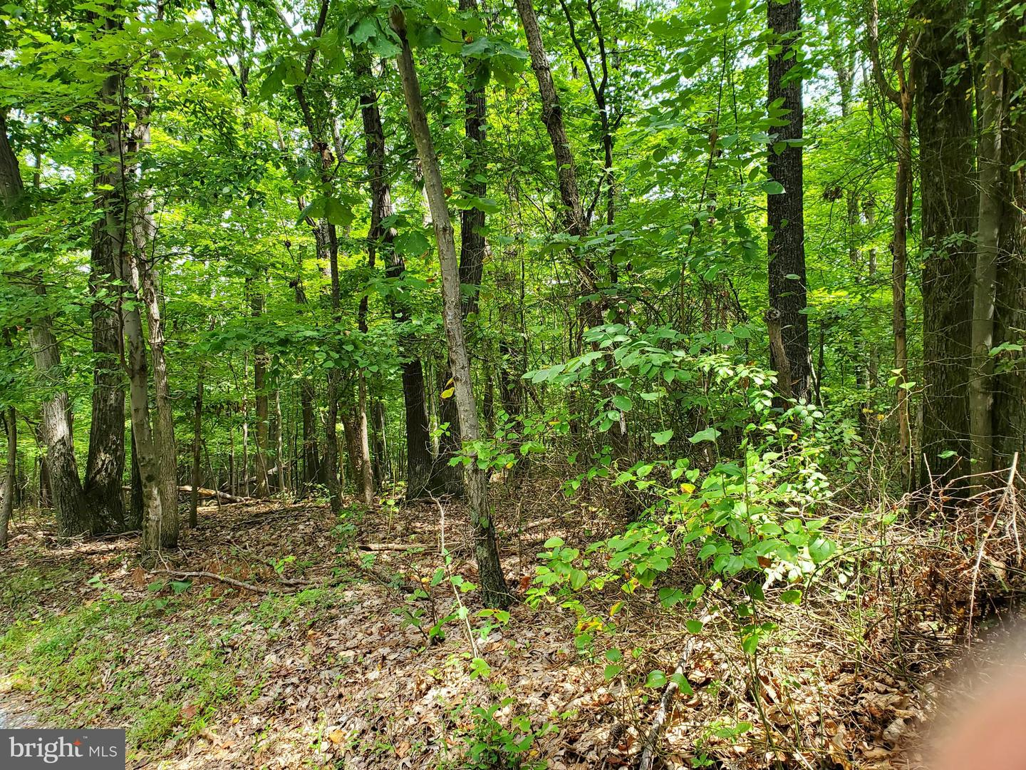 Land for Sale at Hillsboro, Virginia 20132 United States