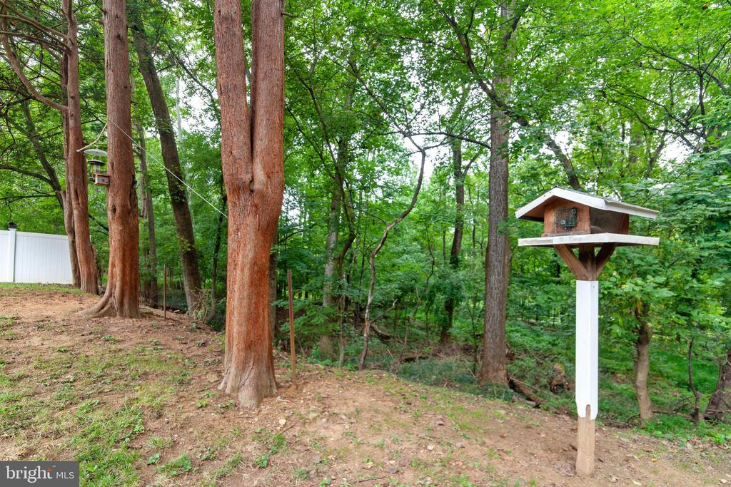 Plenty of nature to enjoy - 522 CALVIN LN, ROCKVILLE
