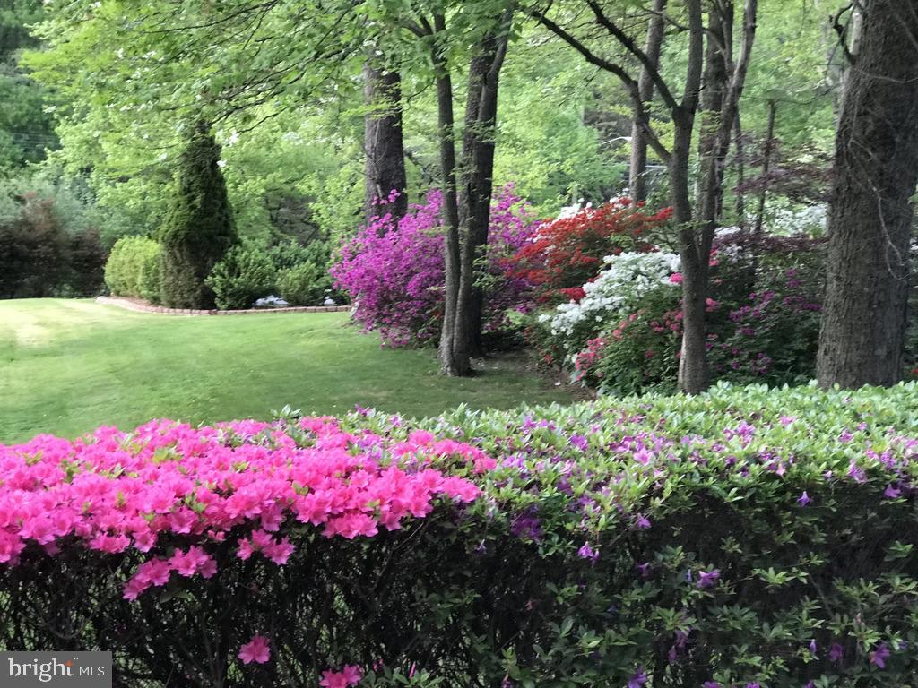 Yard Blossom in Spring - 11107 BRADDOCK RD, FAIRFAX