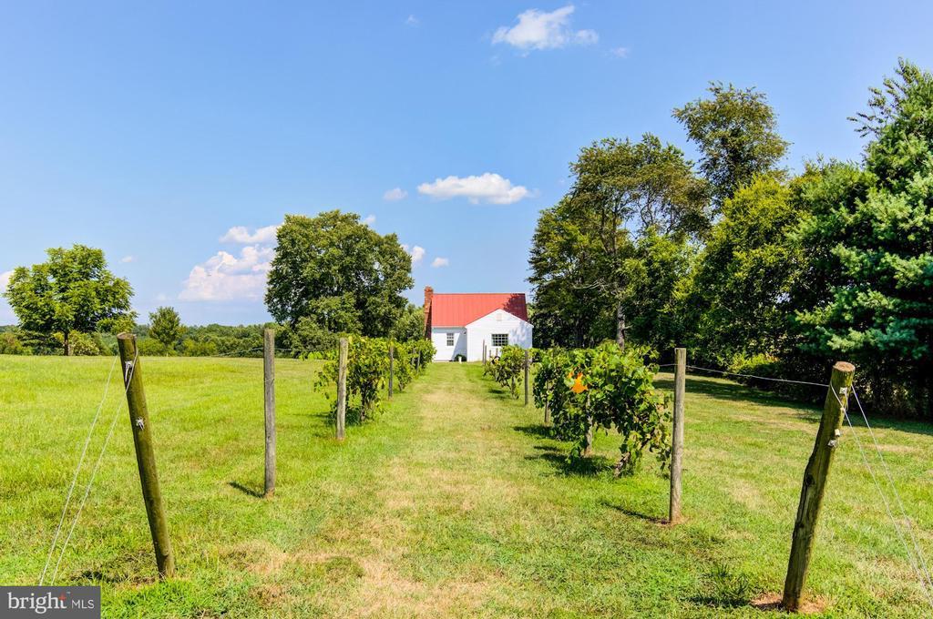 Vineyard - 7508 BELMONT RD, SPOTSYLVANIA