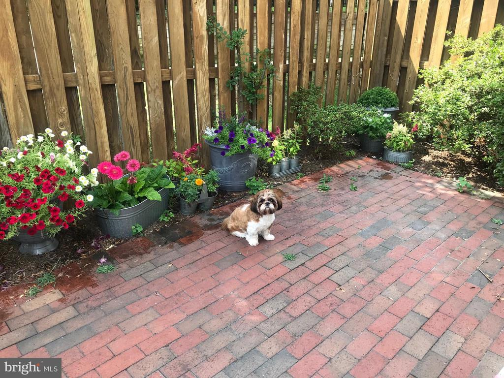 Gorgeous courtyard - dog not included. - 5318 CHIEFTAIN CIR, ALEXANDRIA