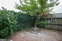 Cherry Blossom Tree - 1011 I ST SE, WASHINGTON