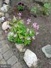One of the beautiful perennials - 7738 TALBOT RUN RD, MOUNT AIRY