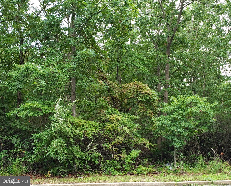 토지 용 매매 에 Cedarville, 뉴저지 08311 미국