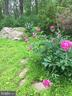 Peonies in bloom - 16657 TREE CROPS LN, ROUND HILL