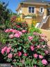 Rose bushes abound! - 120 QUAIL LN, NEW MARKET
