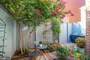 Private backyard garden - 1511 16TH ST NW, WASHINGTON