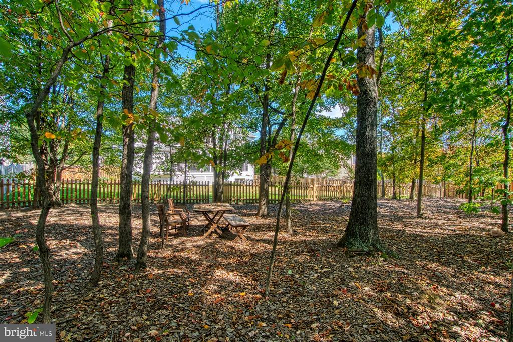 Wooded Section of the Backyard - 42763 FOREST CREST CT, ASHBURN