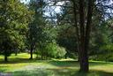 Driveway lined with mature trees - 21 ANNIES LN, SPERRYVILLE
