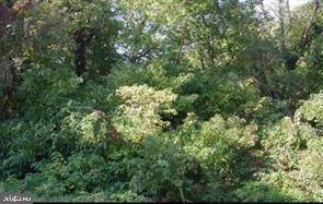Arazi için Satış at Cobb Island, Maryland 20625 Amerika Birleşik Devletleri