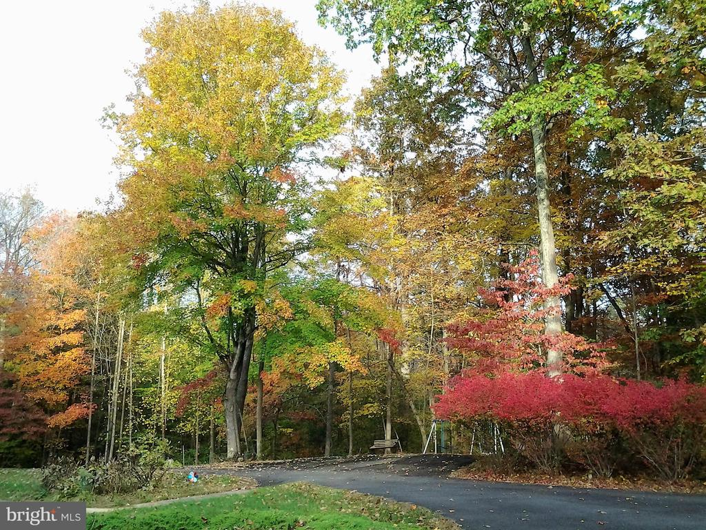 Nature abounds with beautiful Autumn - 12219 CHAPEL RD, CLIFTON