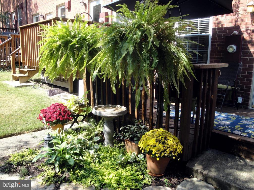 Garden beyond deck - 1100 S BARTON ST S #292, ARLINGTON