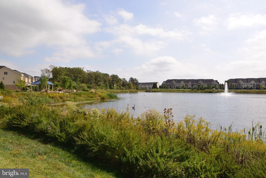 Avonlea Reserve Community Lake - 25017 CAMBRIDGE HILL TER, CHANTILLY