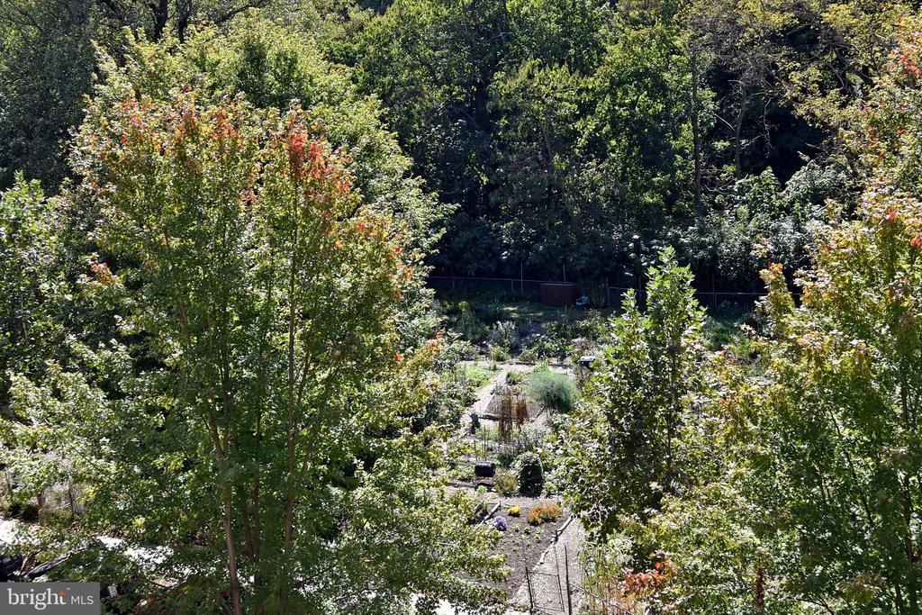 Beautiful View of the Community Gardens - 3041 SEDGWICK ST NW #503-D, WASHINGTON