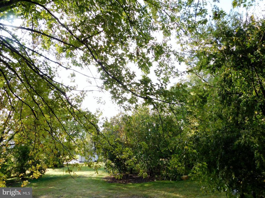 Back Yard - 2083 BERRYVILLE PIKE, RIPPON