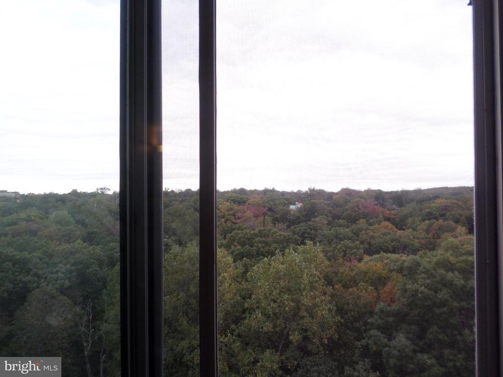 tree top views from window - 2939 VAN NESS ST NW #1212, WASHINGTON