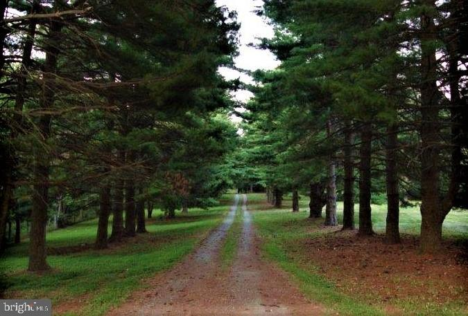 Beautiful evergreen tree lined drive! - 18217 CANBY RD, LEESBURG