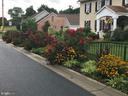 Beautiful perennials frame the front yard. - 108 PARK LN, THURMONT
