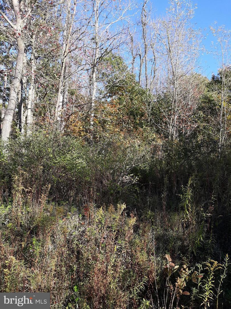 土地 為 出售 在 LOT MARYLAND HIGHWAY Swanton, 馬里蘭州 21561 美國