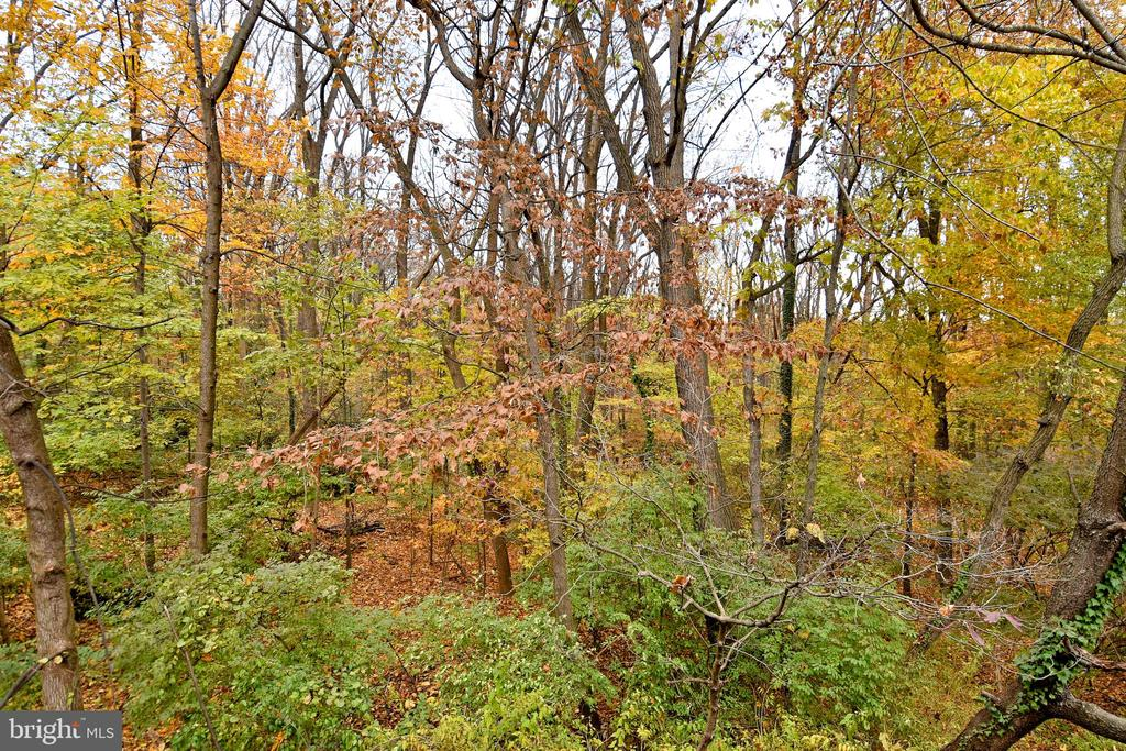 Private wooded view. - 535 N LONGFELLOW ST, ARLINGTON