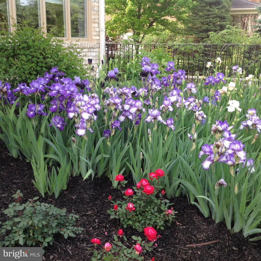 Gorgeous flower beds - 17066 WINNING COLORS PL, LEESBURG