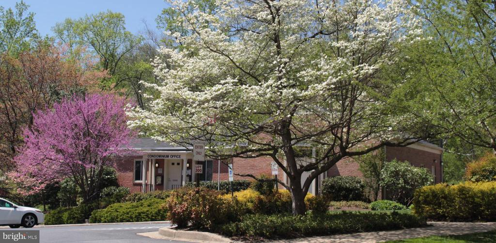Community center with Mgt. office and 2 clubhouses - 10655 WEYMOUTH ST #101, BETHESDA