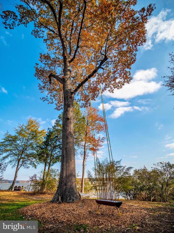 Oak tree with swing and views - 4610 FRIENDSHIP ACRES RD, NANJEMOY