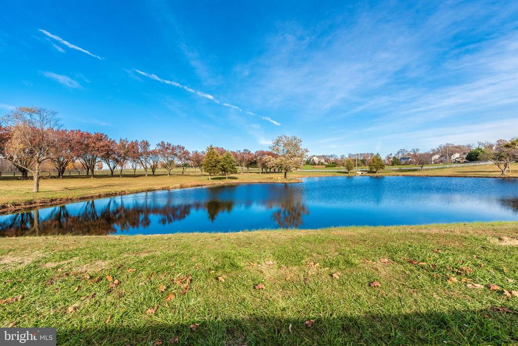 Relaxing pond. - 5302 IJAMSVILLE RD, IJAMSVILLE