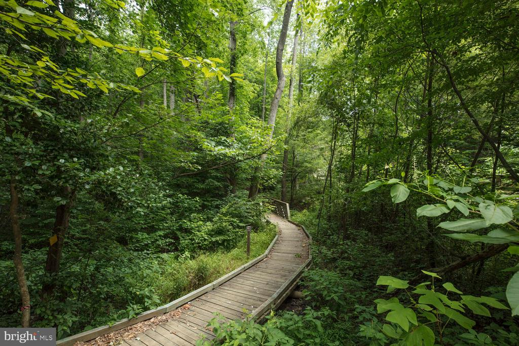 We have miles and miles of nature trails - 17101 GULLWING DR, DUMFRIES