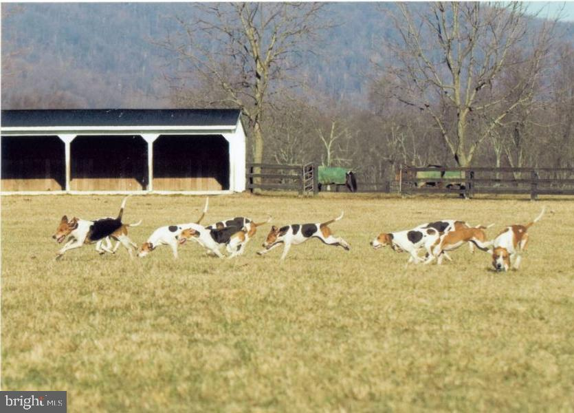 the fox hounds at Rock Hill Farm - 20775 AIRMONT RD, BLUEMONT