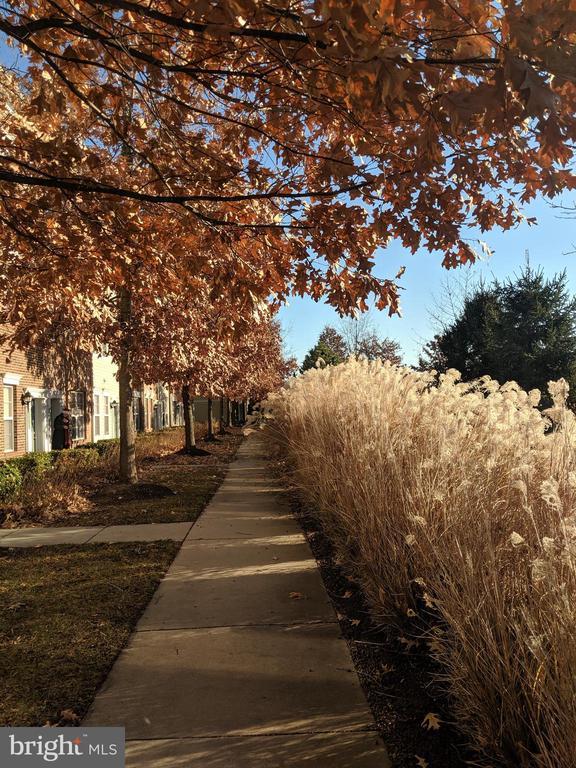 Front Sidewalk - 42439 ROCKROSE SQ, BRAMBLETON