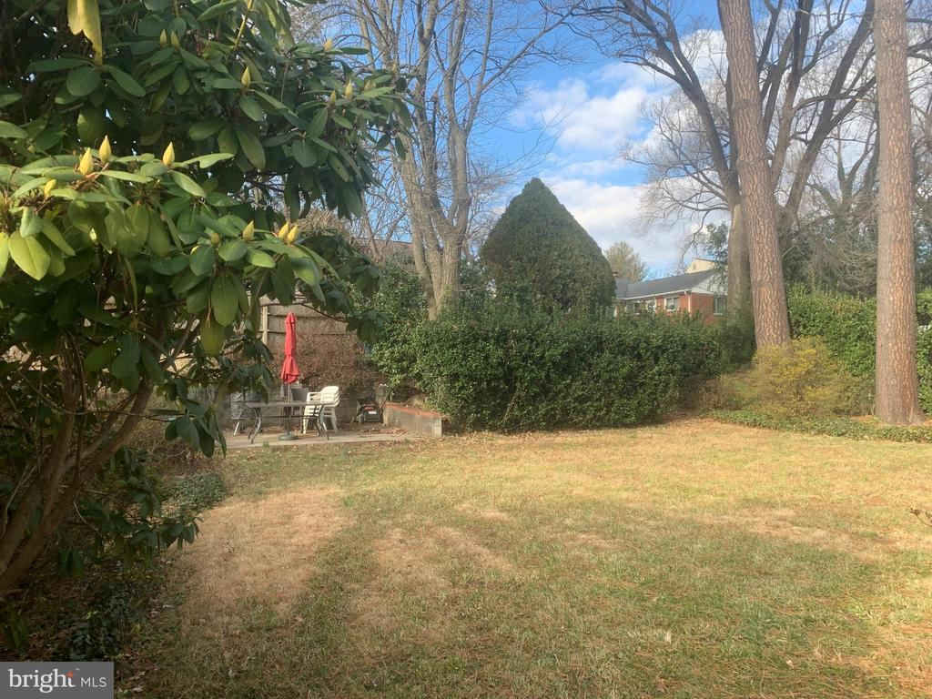 Flat rear yard rimmed by evergreens & trees - 12602 VALLEYWOOD DR, SILVER SPRING
