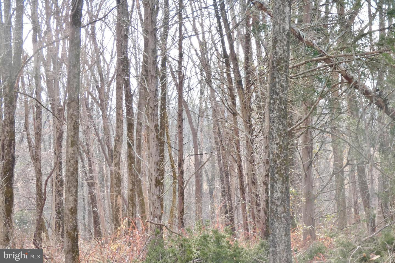 Additional photo for property listing at  Princeton, New Jersey 08540 Amerika Birleşik Devletleri