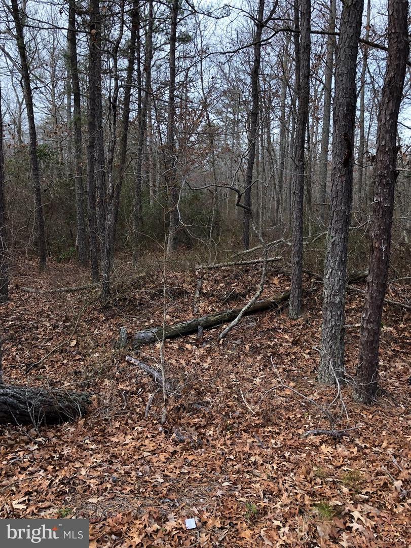 土地,用地 为 销售 在 Estell Manor, 新泽西州 08319 美国