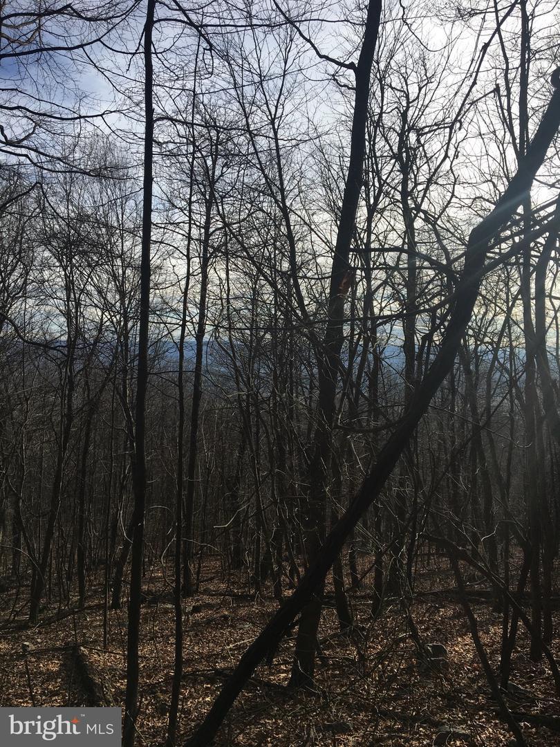 土地 為 出售 在 Maurertown, 弗吉尼亞州 22644 美國