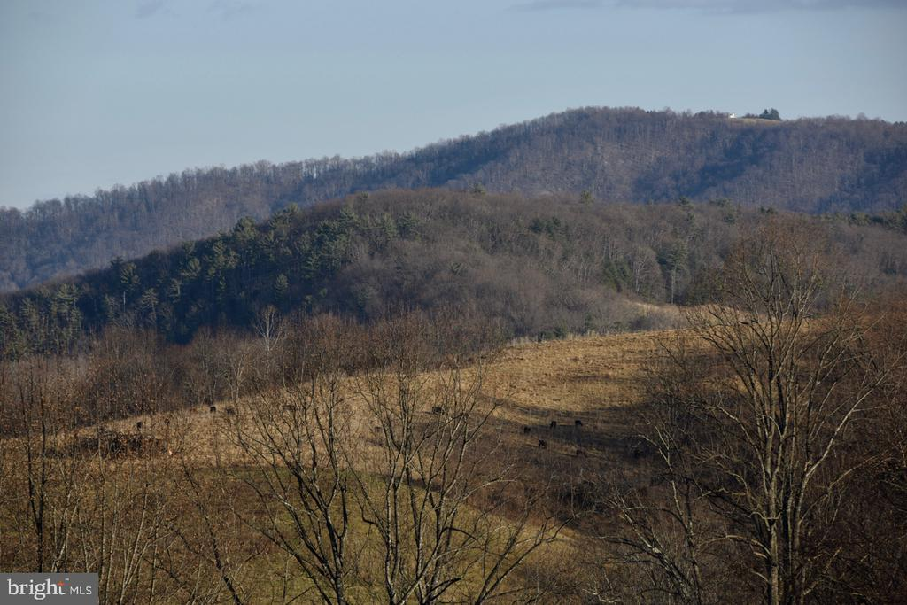 South View to Red Oak Mountain - 1628 F T VALLEY RD, SPERRYVILLE