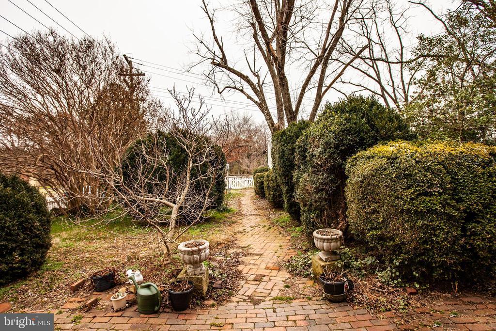 Back yard w/mature boxwoods - 100 CARTER ST, FREDERICKSBURG