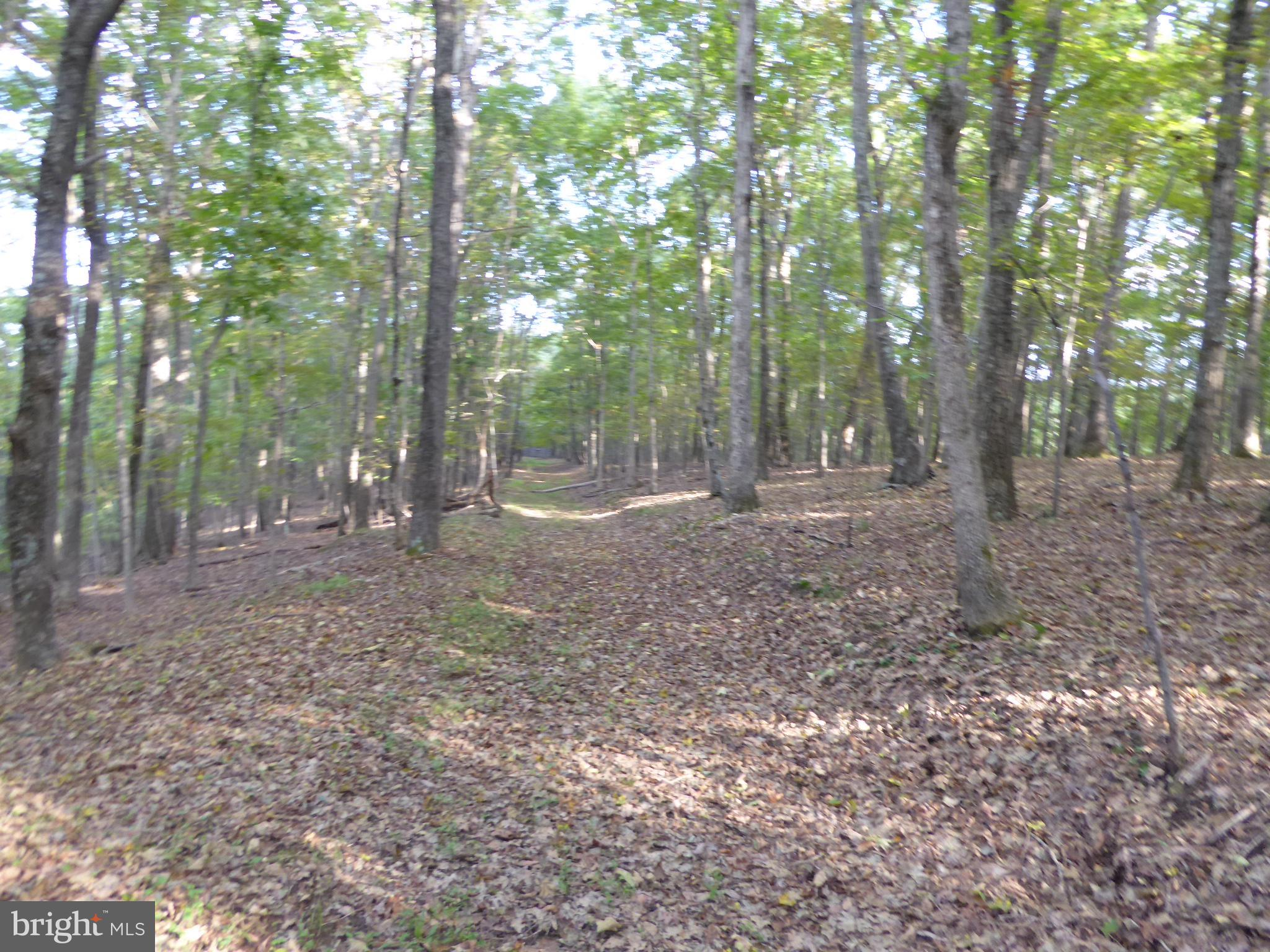 FOREST DRIVE, SHORT GAP, WV 26726