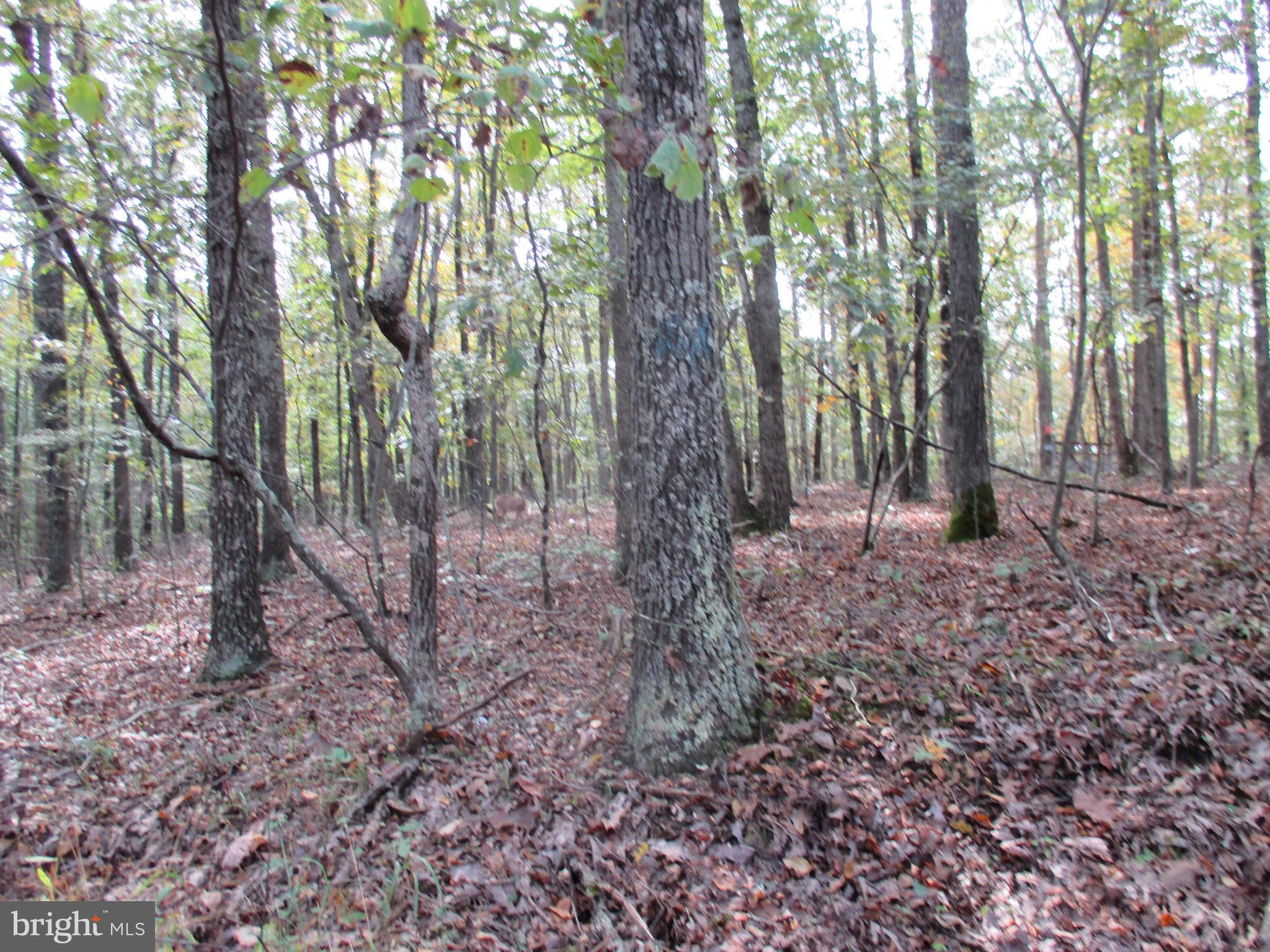 0 RIVER ROAD, FISHER, WV 26818