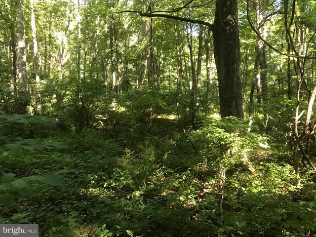 TIMBERLINE DR., LOST RIVER, WV 26810