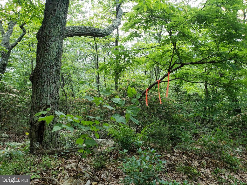 LOT 30 PANTHER ROAD, MAYSVILLE, WV 26833