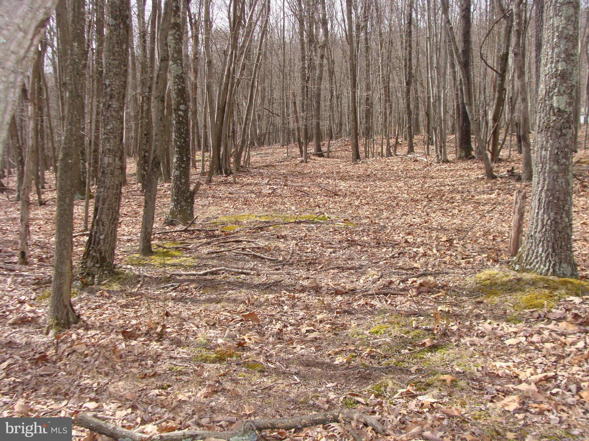 LOT 13 PAULS WOODS ROAD, DELRAY, WV 26714