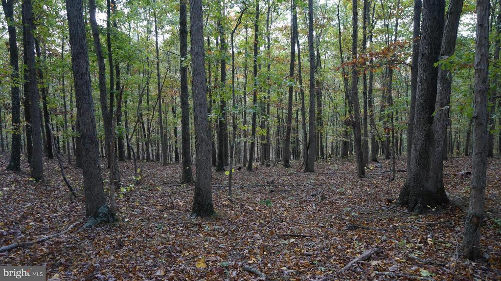 9.69 Acre Parcel -  Situated off Winchester Grade Road approximately 8 miles from downtown Berkeley Springs this wooded acreage makes a great spot for your new home.   Build in the middle giving you privacy from the surrounding neighbors.  Enjoy hunting, riding your ATV, nature and wildlife.  Horses allowed, some protective covenants and restrictions apply.