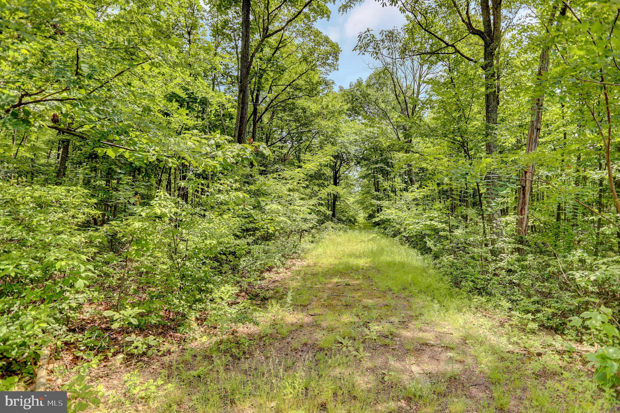 Lot 33 TODD PASS, JAMES CREEK, PA 16657