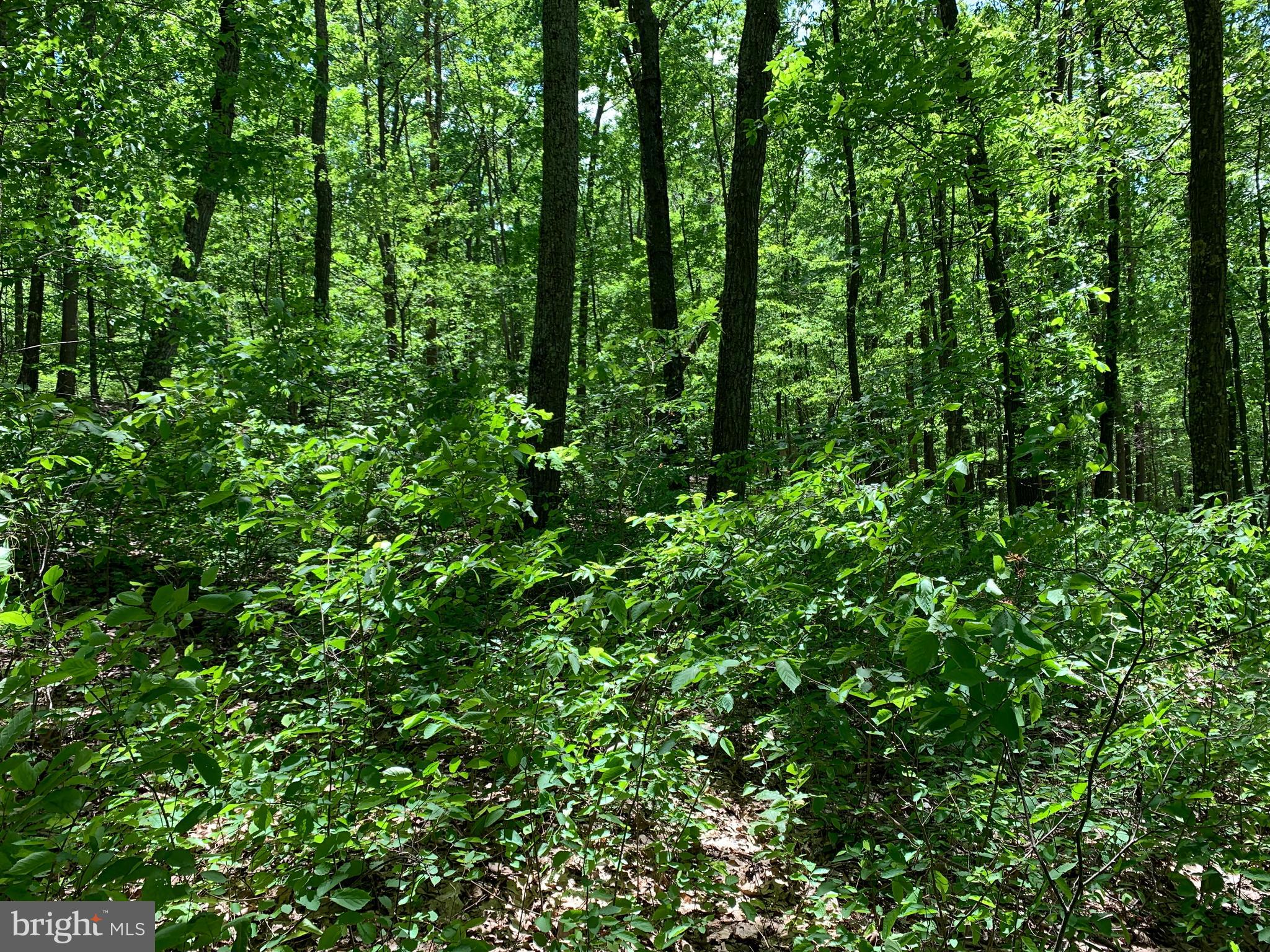Lot 7 MONROE MOUNTAIN ROAD, CLEARVILLE, PA 15535