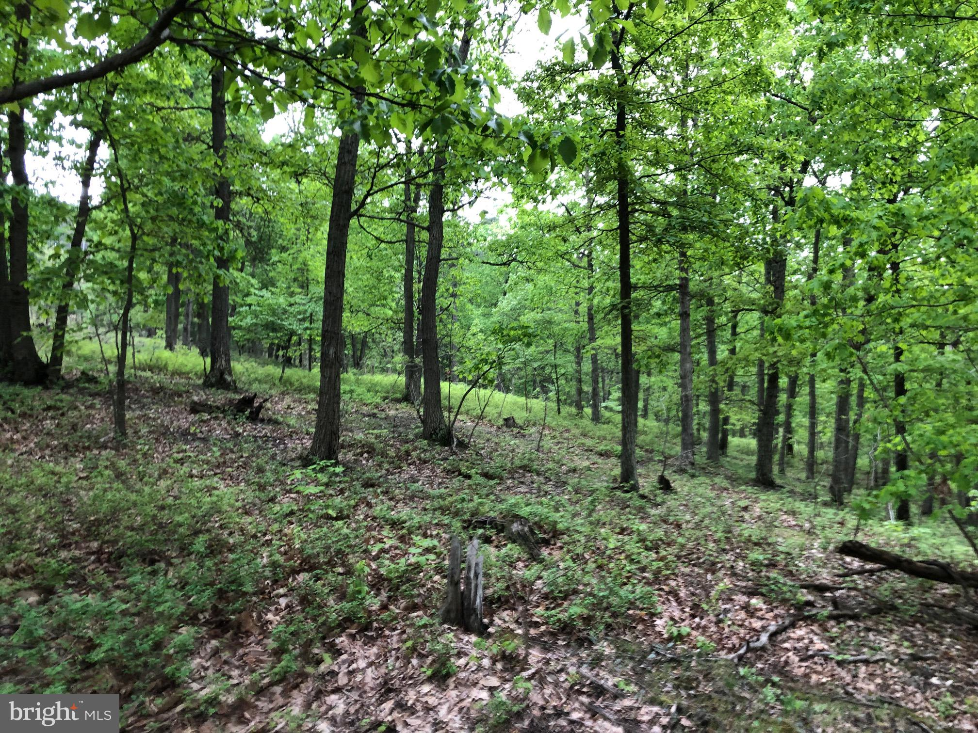 LOT 2 BLUFFS ROAD, FORT ASHBY, WV 26719