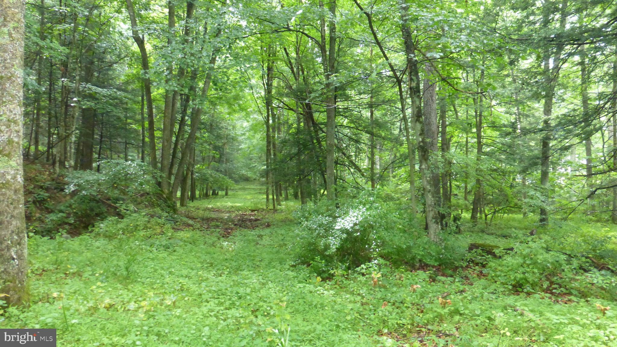 Lot 7 MIDDLE COVE, LOST CITY, WV 26810