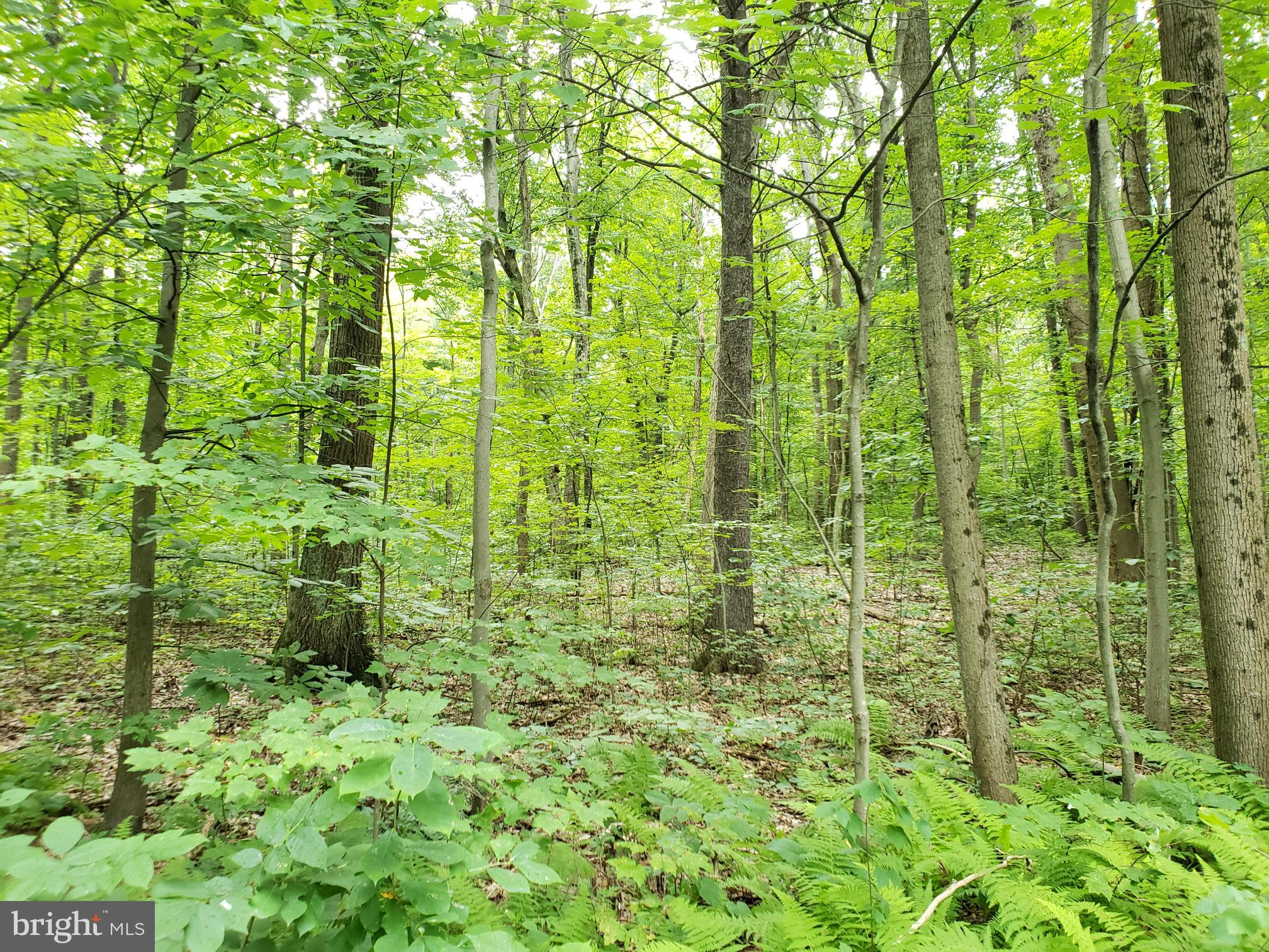0 WILDCAT TRAIL, LIVERPOOL, PA 17045