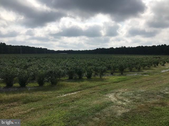 Blueberry Farm with ~Pick your own already Established Business~ on approximately 16 Acres of an Irrigated Blueberry Field!  If you want privacy this is the property for you on 25 Acres of immaculate fields.  All equipment is included; a list is available in file.  There are 2 wells on property, one for house, one for Blueberry irrigation system plus a small irrigation pond.  Also, included is a Brick Front ~L~ Shaped Ranch Home with 3 Bedrooms with a covered Back Porch and great views of the Farm.   The Family room includes a brick wood burning Fireplace and woodstove that will heat the entire house or use the central Heating system if you chose.  There is a nice wraparound porch and an attached garage.  If you are interested in owning your own Blueberry Farm you must take a look at this property.