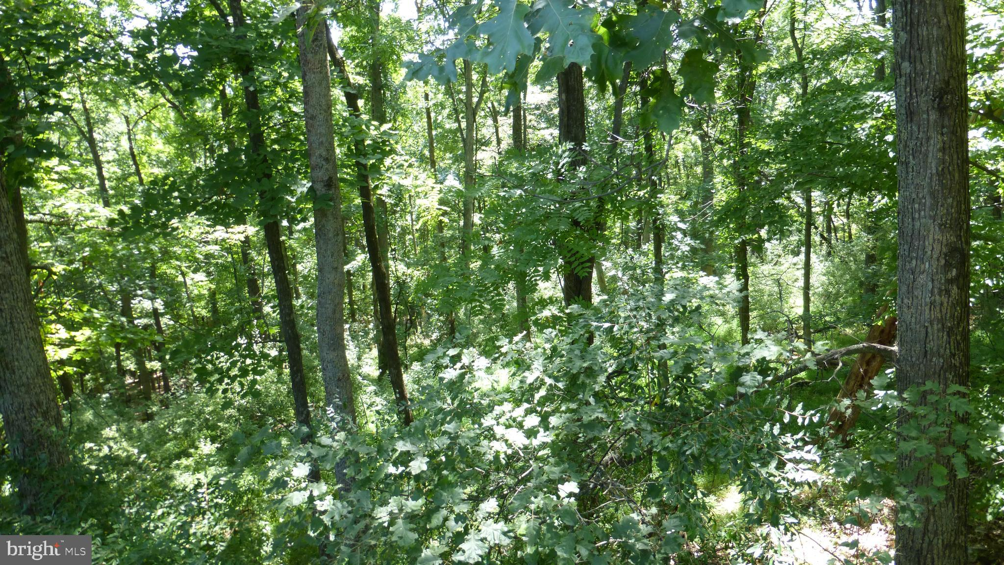 SETTLERS VALLEY, LOST RIVER, WV 26810